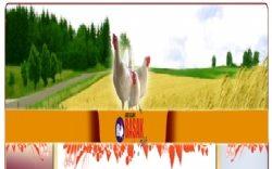 Başak Tavukçuluk Gıda Üretim Pazarlama Nakliyat Sanayi Ve Ticaret Ltd. Şti.